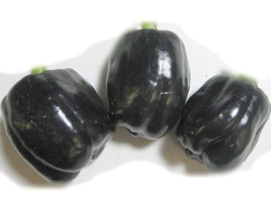 Giant Purple sweet bell pepper seeds, hand harvested natural unique & unusual seeds